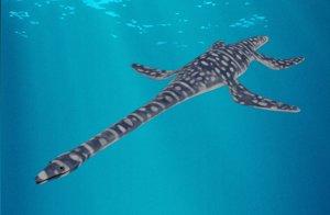 3D plesiosaurus plesiosaur