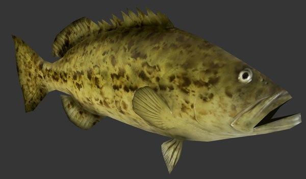 grouper 3D model