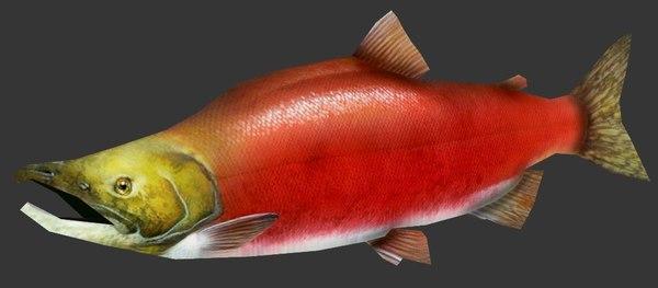 sockeye salmon 3D model