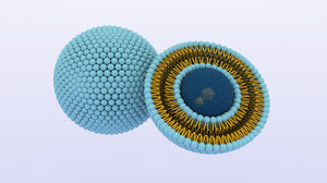 liposome nanoparticle 3D model