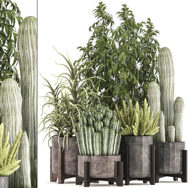 houseplants exotic plants cactus 3D