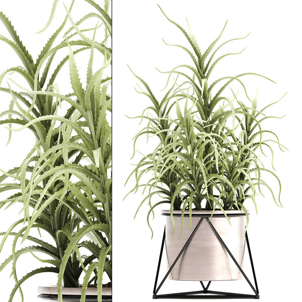 3D aloe arborescens plants