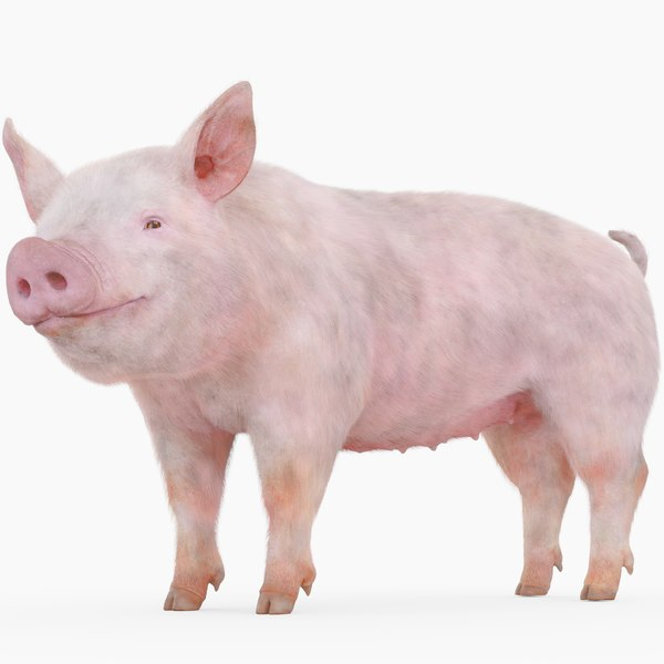 3D pig rig