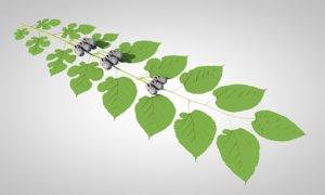 mulberry berries leaf model