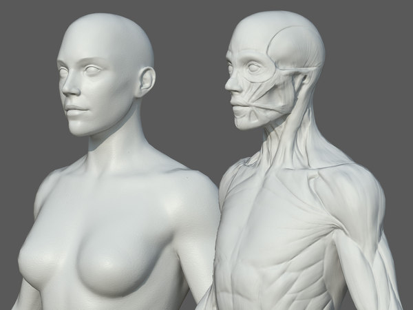 3D model character female anatomy body