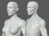 Character - Female Anatomy Body Base