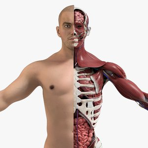 3D male complete anatomy man