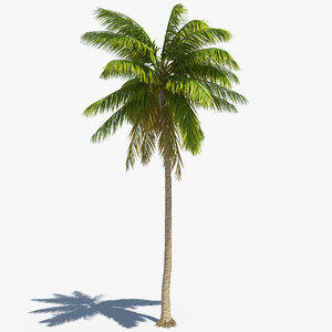 realistic coconut palm model