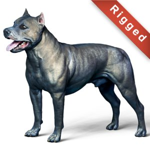 3D dog american pit bull