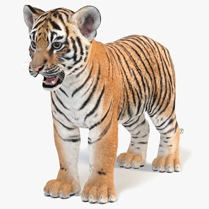 3D tiger animal mammal