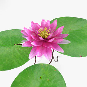 3D lily water