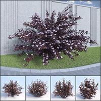 3D shrubs bush leaves