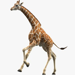 realistic giraffe animations 3D model
