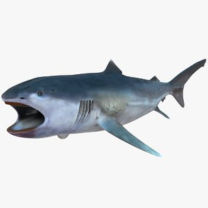 realistic female megamouth shark 3D model