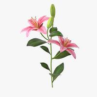 3D lily flower plant model