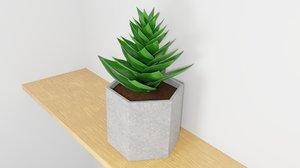 potted succulent plant planter 3D model