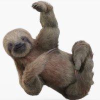 Sloth (Rigged) (Fur)