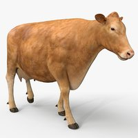 3D cow limousin pro animations model