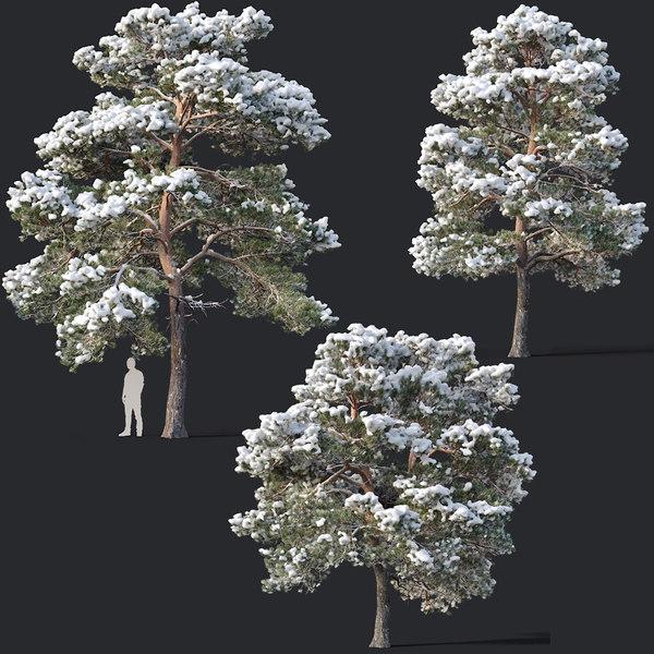 pines needles model
