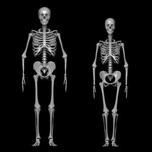 bones men model