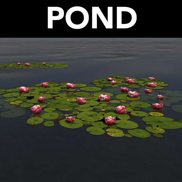 3D water pond lily pads model
