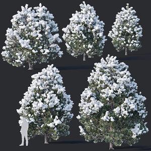 pines snow needles 3D model