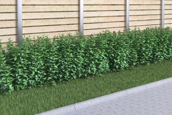 bushes ninebark physocarpus opulifolius 3D model