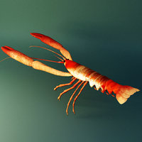 crawfish 3D model