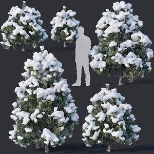 pines snow 3D model