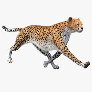 3D model big cheetah rigged fur