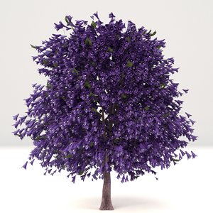 young mature jacaranda tree 3D model
