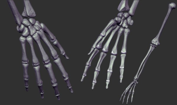 arm skeleton realistic 3D