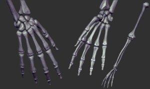 arm skeleton realistic 3D