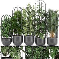 ornamental plants exotic model