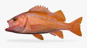 canary rockfish model