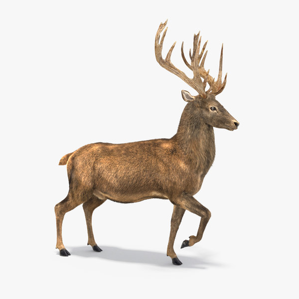 rigged deer fur 3D model