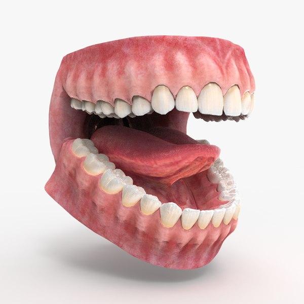 3D mouth teeth gums