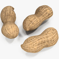 peanut nut pea 3D model