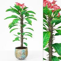 plant 7 3D model
