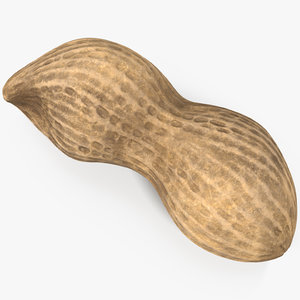 peanut 2 3D model
