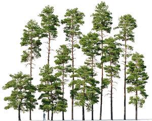 3D mega 12 pines model