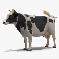 grass eating cow animal 3D model