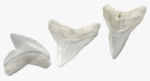 shark teeth model