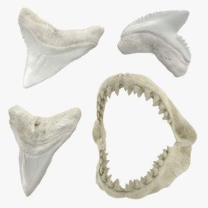 shark teeth 2 3D model