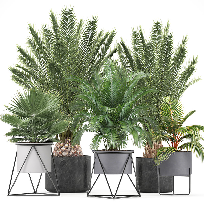 Collection of ornamental plants and Exotic