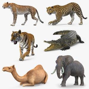 african animals 3 rigged 3D model