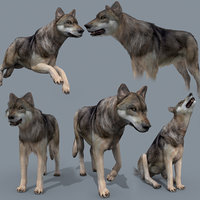 wolf animation - 3D model