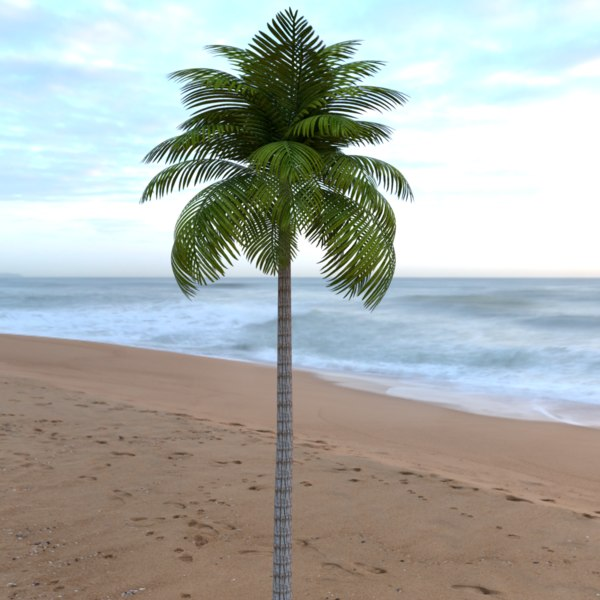leaves palm leaf tropical tree 3D model