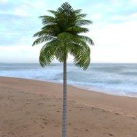 leaves palm leaf tropical tree 3D model