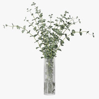 3D eucalyptus plant